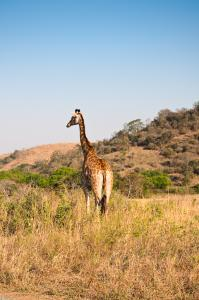 Africa (126 of 81)