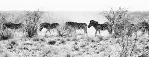 Wildlife-131