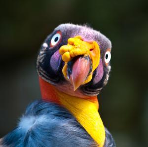 birds-7